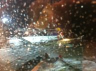 De-icing in progress at TXL