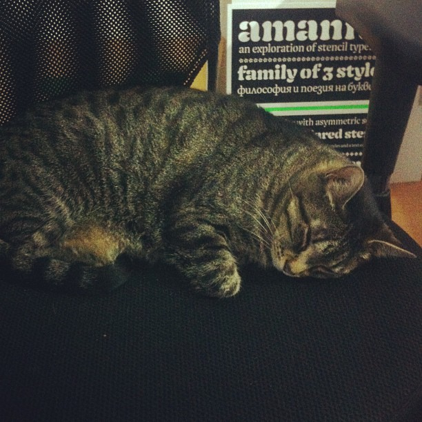 The cat is not helping setup this show...