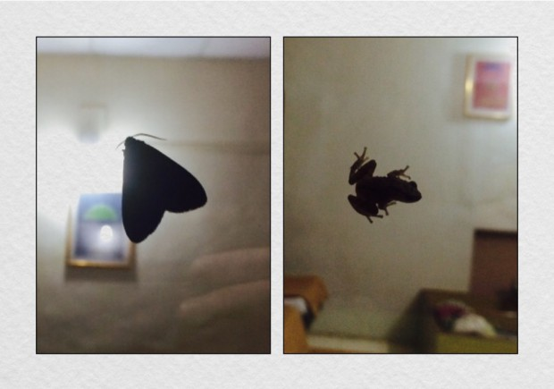 There's a moth & a frog on the window...