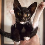 Meet Nukta, the latest addition to our family…