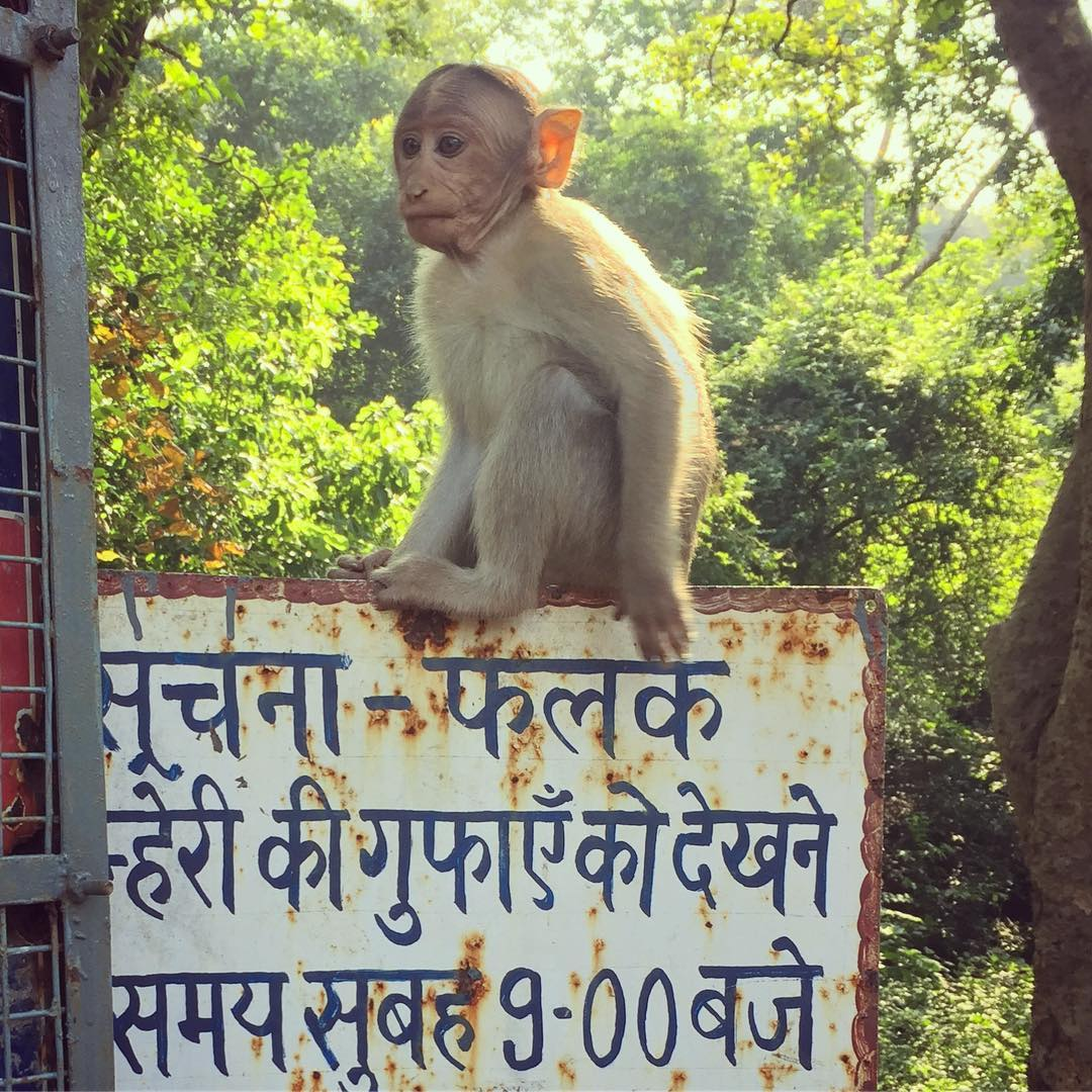 There are actually monkeys in the middle of…
